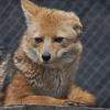 Panorama para enero: Conoce las jornadas de verano en el Centro de Rehabilitación de Fauna Silvestre de CODEFF