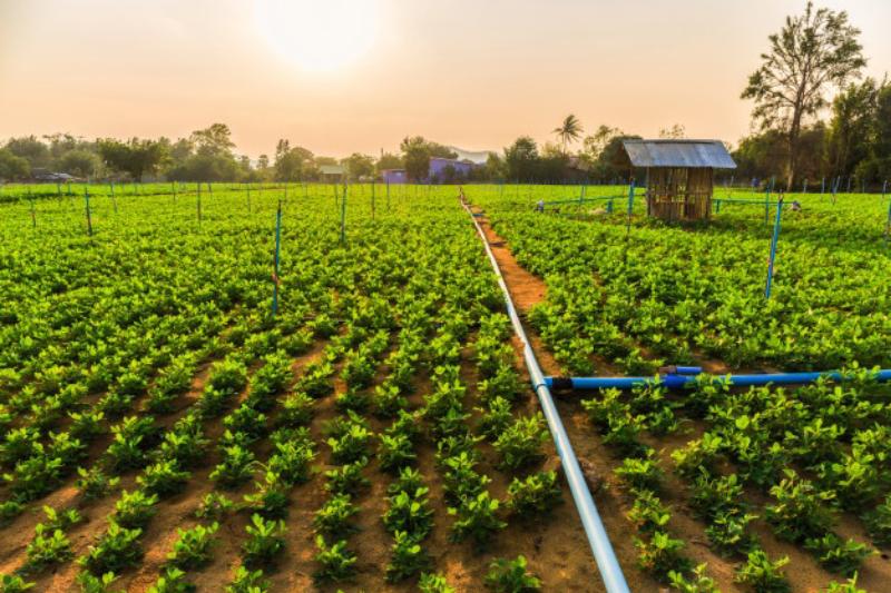 Jóvenes de zonas rurales de la región podrán mejorar sus emprendimientos gracias al programa Agroemprende