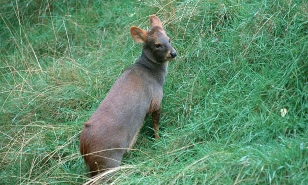 Cinco animales de Chile que no pueden vivir sin su otra mitad