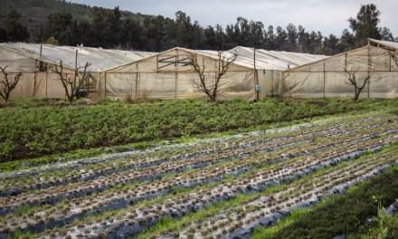 Foodsys: Emprendimiento mejora distribución de alimentos mediante uso de Inteligencia Artificial colaborativa
