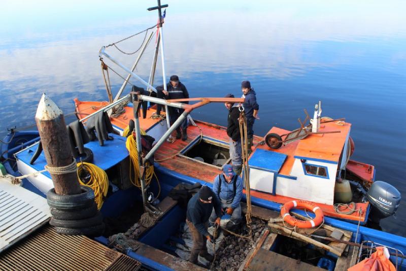 Maullín: Productores de loco avanzan en certificación Fair Trade