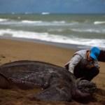 Subway® Latinoamérica se compromete con un futuro libre de plástico de uso único en toda la región