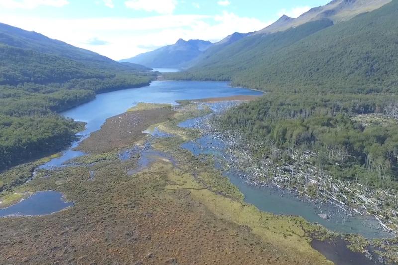 Realizan sobrevuelo con cámaras drone para conocer desde las alturas el estado de los ecosistemas dañados por el castor