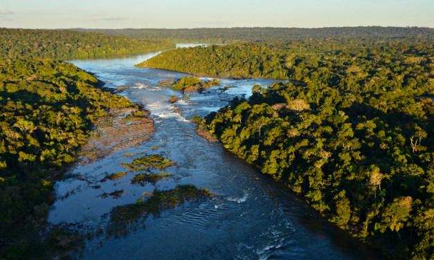 Declaración de WWF sobre los devastadores incendios forestales en la Amazonía