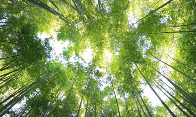 Plataforma de reforestación ha plantado 5 millones de árboles para luchar contra el cambio climático