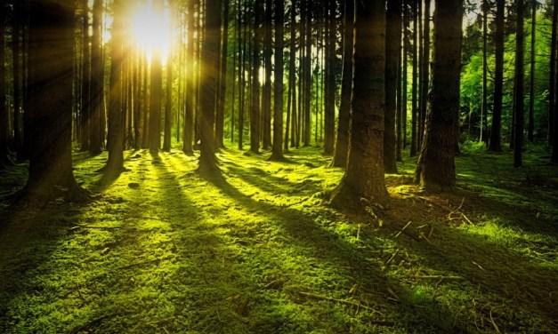 2020: un año clave para enfrentar las emergencias del clima y la biodiversidad