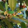 Estudio busca obtener información actualizada sobre el Queule y su hábitat