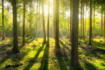 Informe de la ONU: a medida que los bosques del mundo siguen menguando, deben tomarse medidas urgentes para salvaguardar su biodiversidad