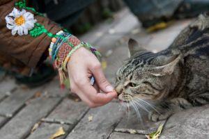 Iniciativa de Nestlé Purina con 35 organizaciones animalistas busca beneficiar con 100 mil kilos de alimento a animales en situación vulnerable