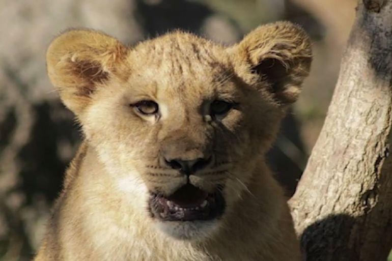 Buin Zoo inicia campaña para recaudar fondos tras 100 días cerrado por coronavirus