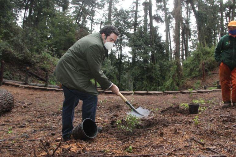 Fundación Reforestemos y Minvu del Biobío firman nuevo convenio para recuperar los bosques nativos de la región.