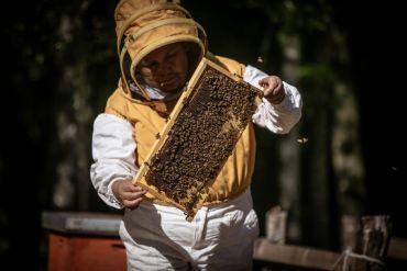 Apicultura Pewenche de Callaqui busca rescatar formas tradicionales de cosecha de miel