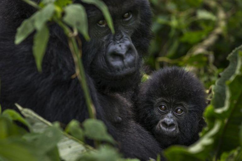 Principal informe de WWF alerta sobre pronunciado declive de biodiversidad en América Latina