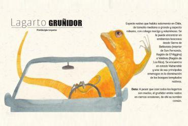 """Rana chilena, monito del monte o lagarto gruñidor: descarga el librillo """"Conoce tu Fauna"""" que incluye 13 especies únicas en Chile para colorear"""