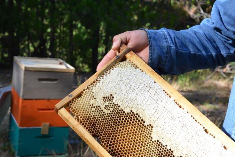 Por primera vez en Chile la miel obtiene certificación de origen forestal sostenible