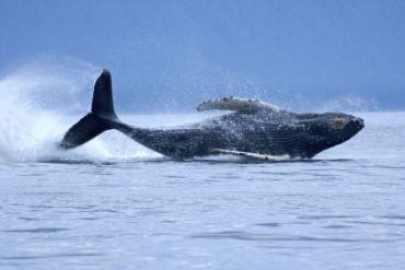 Nueva iniciativa regional de WWF busca identificar y conservar los Corredores Azules oceánicos