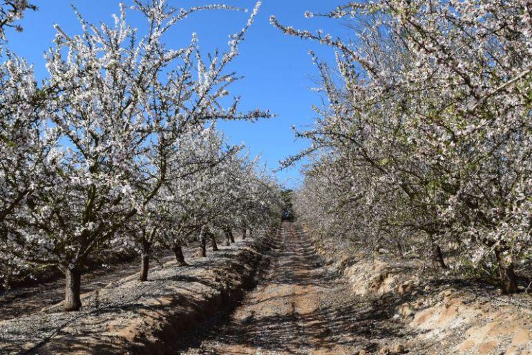 Proyecto apuesta por armonizar una mayor biodiversidad de plantas y abejas nativas con la productividad de huertos comerciales de la Región Metropolitana