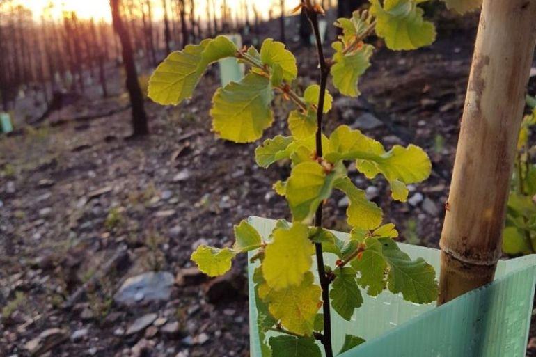 Fundación Reforestemos junto a CMPC realizan importante donación de 2.000 árboles nativos a JUNJI del Biobío