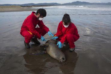 Greenpeace: Los problemas ambientales que visibilizó la pandemia
