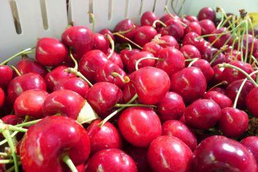 Adaptación al cambio climático y nueva certificación de calidad: las claves para dinamizar exportación de cerezas al mercado asiático