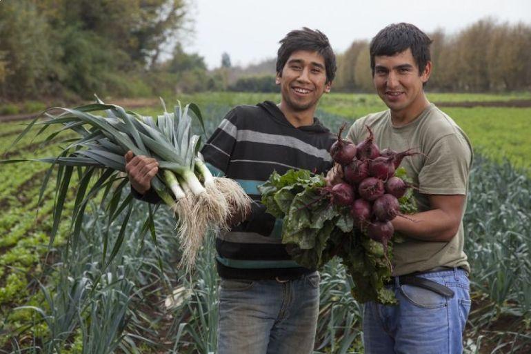 Firman acuerdo para que pequeños agricultores vendan hortalizas a casinos de plantas salmoneras