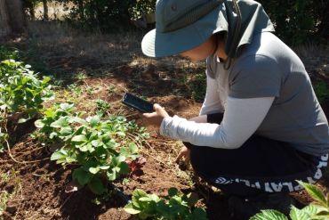 Ai Krops: App usa la Inteligencia artificial para detectar con una fotografía enfermedades en los cultivos agrícolas