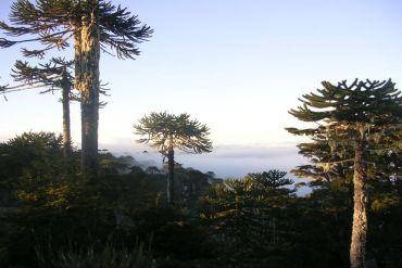Década para la Restauración de Ecosistemas: WWF se une al llamado de la ONU para proteger y restaurar ecosistemas vitales