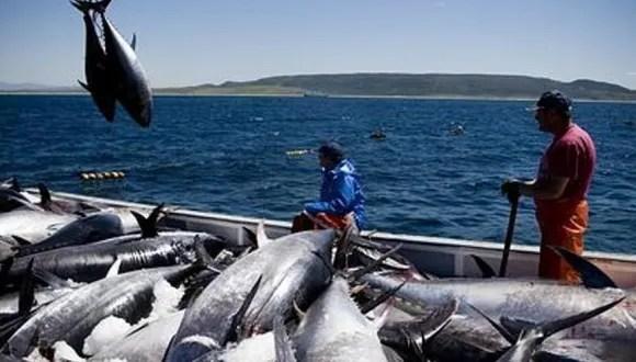 Presidente Alvarado denunciado penalmente por pescadores