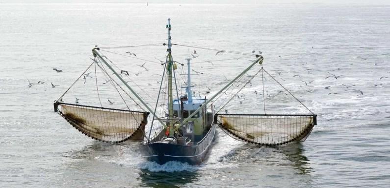 Se reactiva la pesca de arrastre en Costa Rica