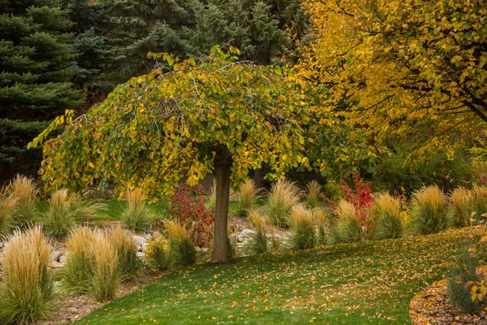 The Tale of a Pioneer Quilt, Cut in Two by popular quilting blog, Diary of a Quilter: image of trees with yellow leaves, pine trees, and landscaping grasses at the Ashton Gardens of Thanksgiving Point in Lehi, UT.