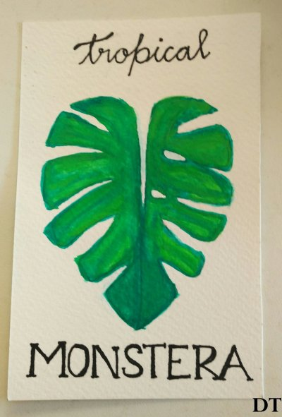 monstera diarytale
