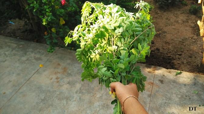 gardens around me