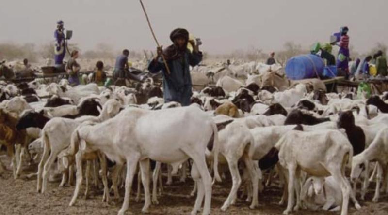 Conseil interministériel : 1 milliard FCFA octroyé aux éleveurs sinistrés.