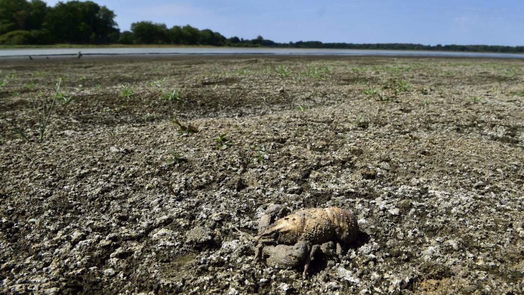 2019 achève la décennie la plus chaude jamais enregistrée, selon l'ONU