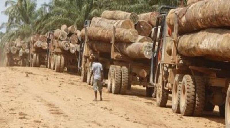 Gambie – Dix-neuf containers remplis de bois en provenance de la Casamance prêts à embarquer