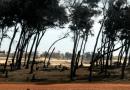 Bamboula foncière : Les Impôts et le Cadastre font main basse sur le Littoral de Guédiawaye