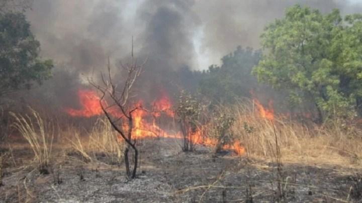 Les feux de brousse font ravage à Matam