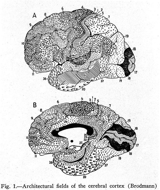 Brodmann Areas of the Brain. Image