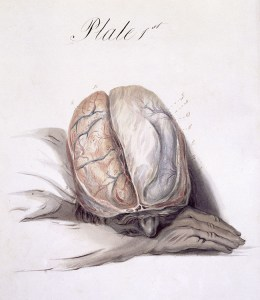 The anatomy of the brain explained in a series of plates, 1802, Plate 1.