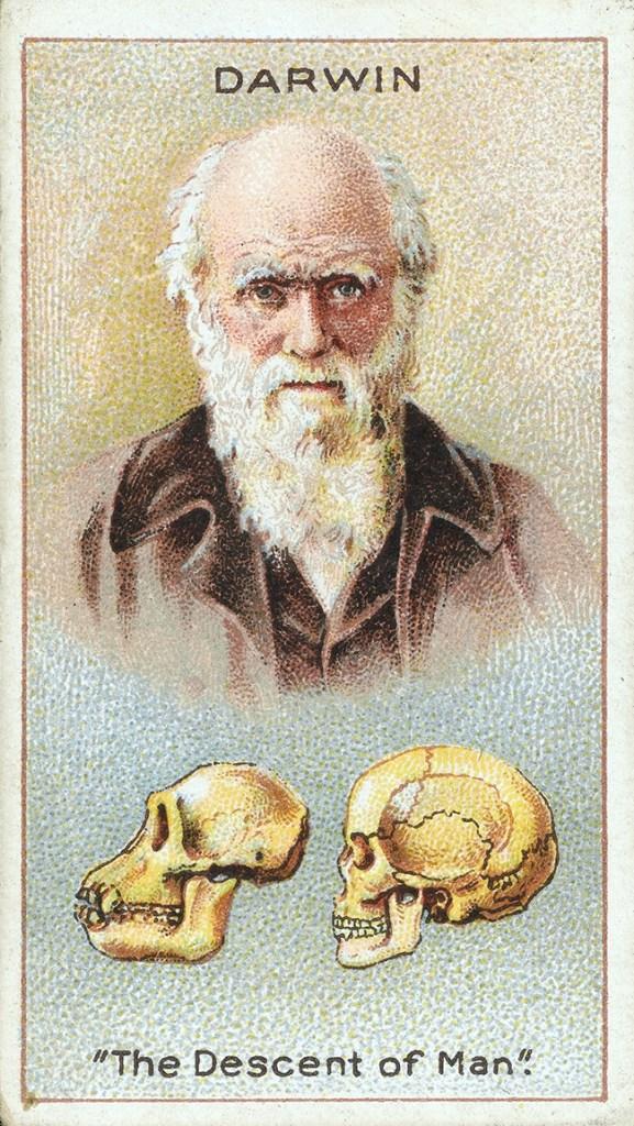 Darwin Souvenir, Image