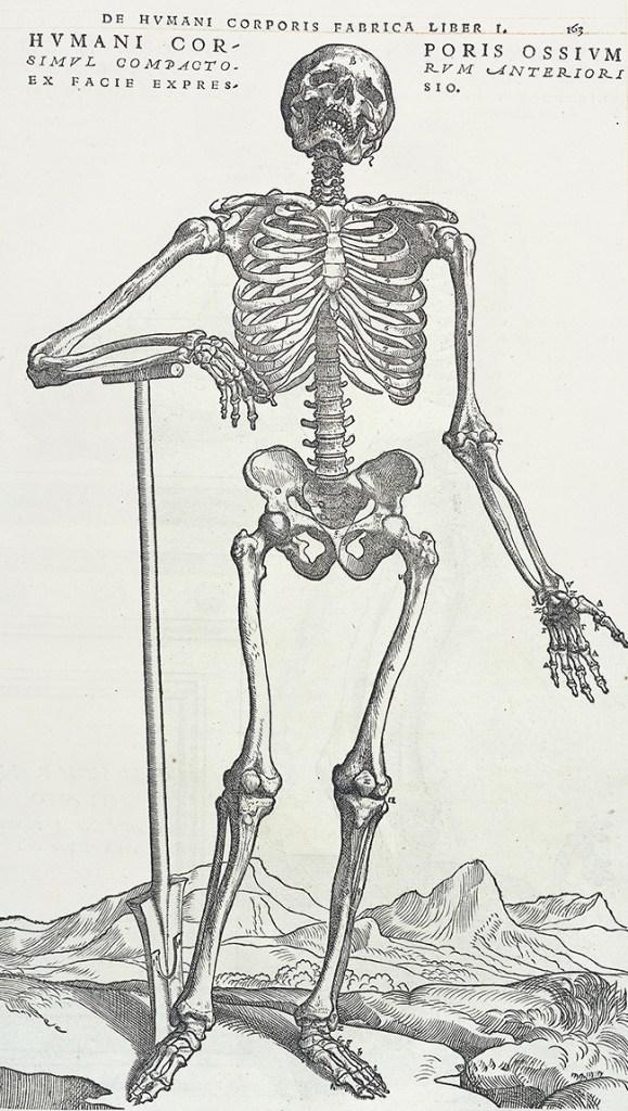 De Humani Corporis Fabrica (On the fabric of the human body). Plate