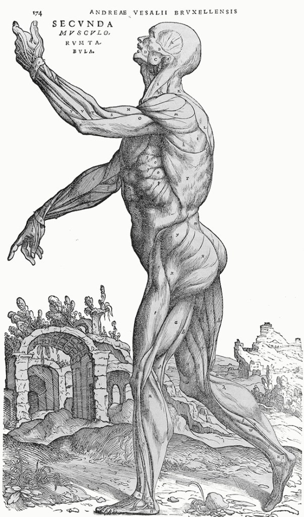 Vesalius. Muscle Men. 1543. Plates 1, 2, 3. Plate