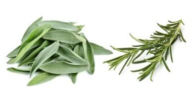 Alecrim e Salvia