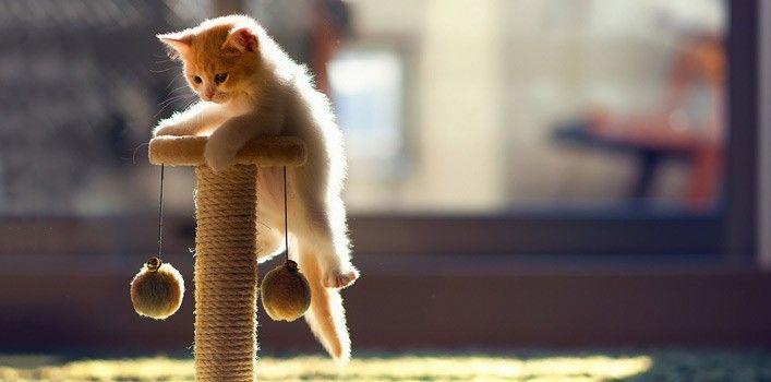 100 fatos interessantes sobre gatos
