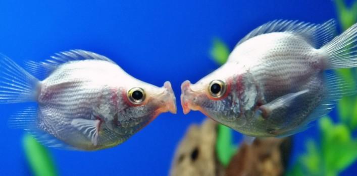 30 fatos verdadeiros sobre peixes tropicais