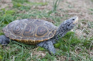 10 fatos interessantes sobre tartarugas