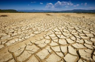 Quais São os Efeitos de Uma Seca no Meio Ambiente?