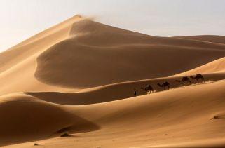 Que Animais Vivem No Deserto Do Saara?