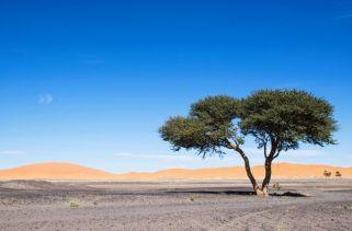 Plantas Que Crescem No Deserto Do Saara