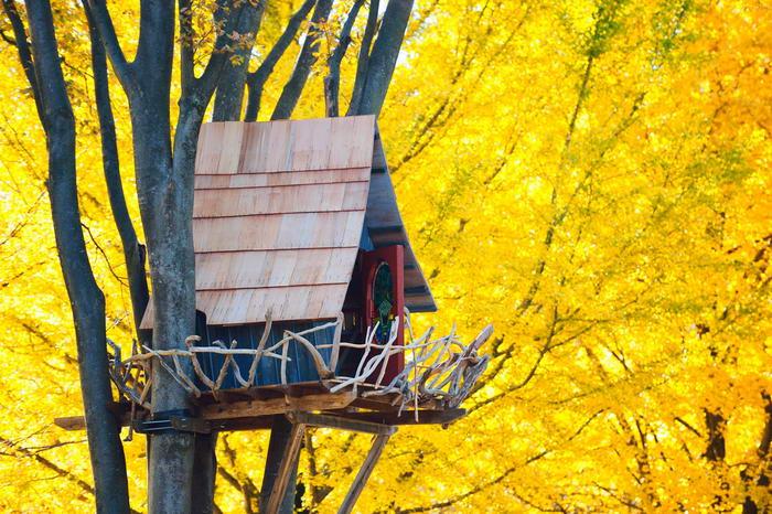 10 casas na árvore mais extraordinárias do mundo